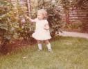 Debbie picking a Gordon Road garden rose 1980