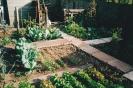 Garden veg plot (pre-pond)_2