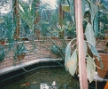 The new conservatory and koi carp pond at The Hayling View, July 1989