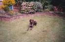 Sam as a puppy, 1993-94